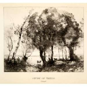 1905 Photogravure Corot French Art White Birch Tree Study